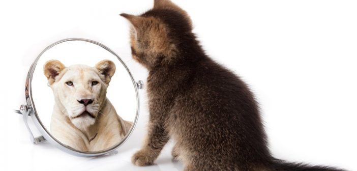 cat looking in mirror at lion reflection
