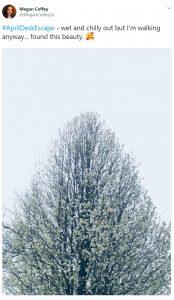 #AprilDeskEscape - snowy tree